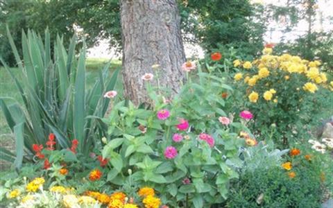 Řízkování růží