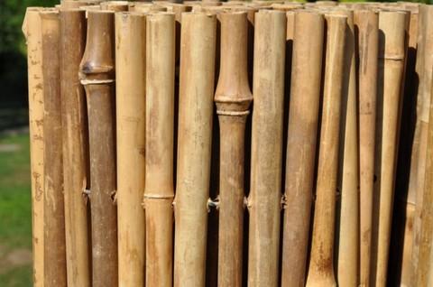 bambusove plotove zabrany